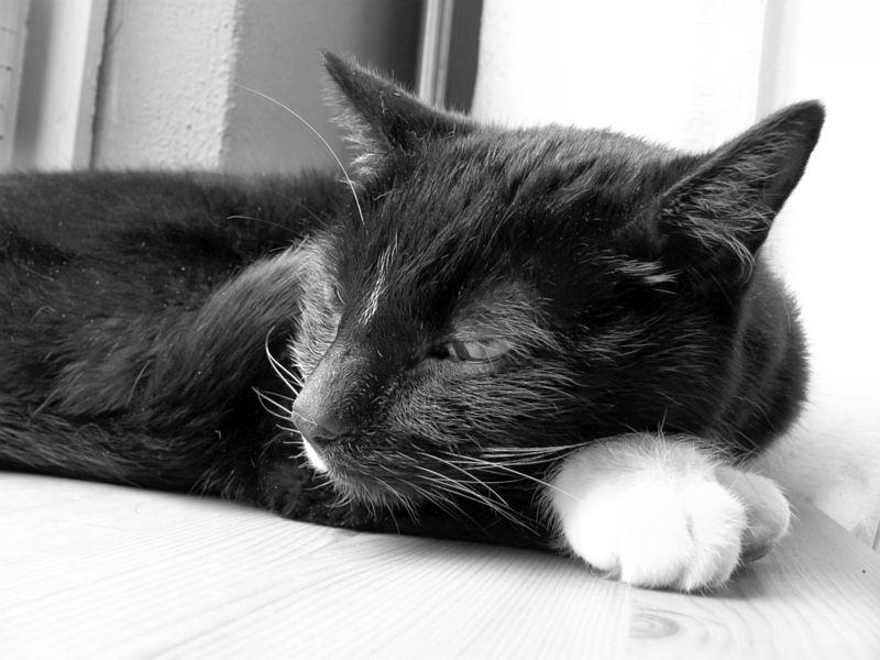 Micky in zwart-wit