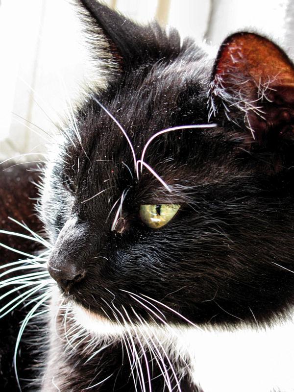 Molly met een scherpe blik