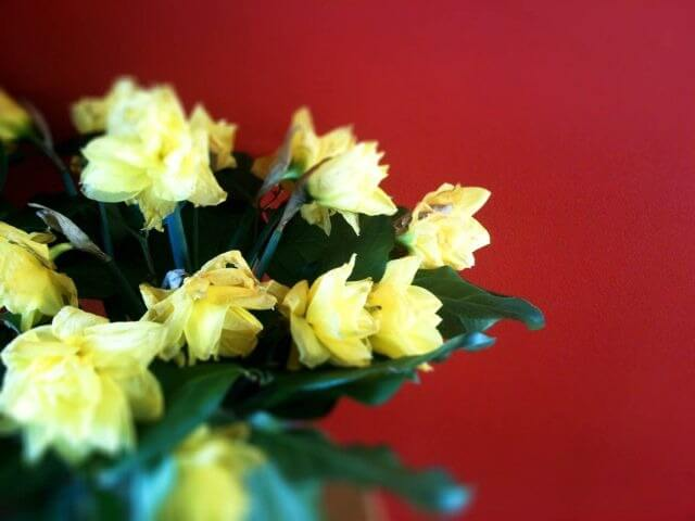 Bloemen bij m'n moeder