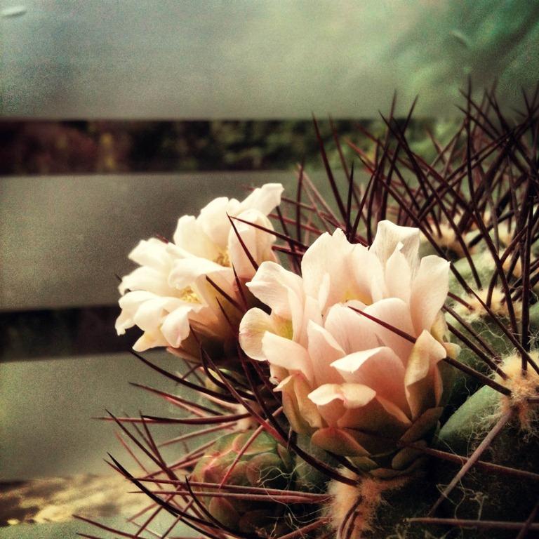 Mooie bloemen bij m'n moeder