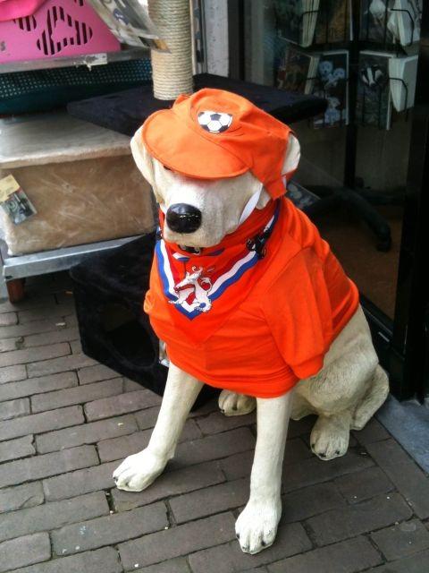 Hond in oranje stijl
