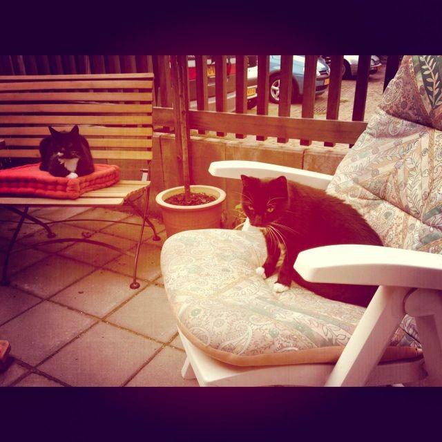 Molly in de stoel