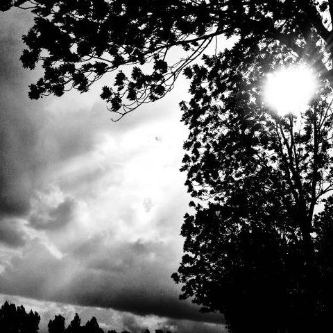 Zwart-wit foto van blaadjes
