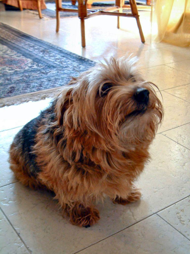 Jumper, de hond van m'n moeder