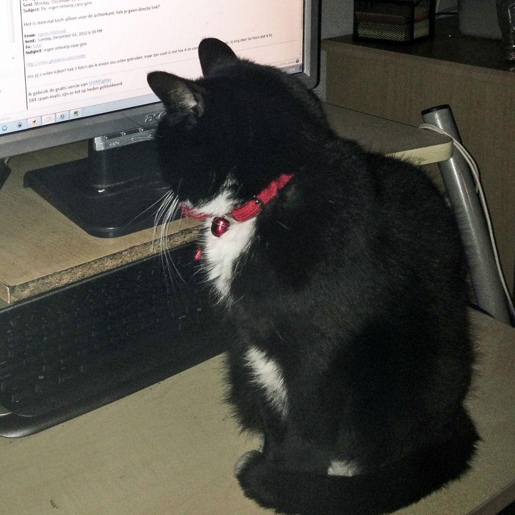 Molly bij de computer