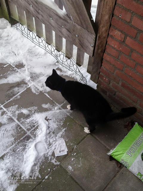 Micky in de sneeuw