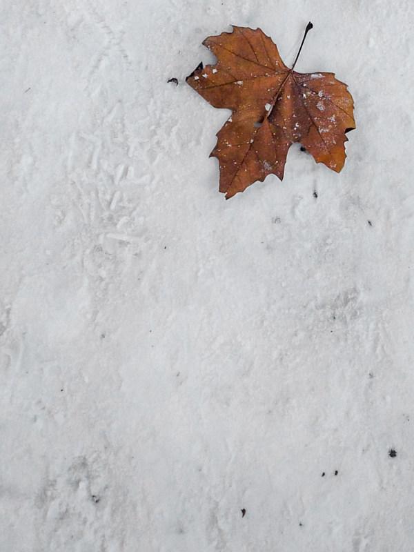 Blaadje in de sneeuw