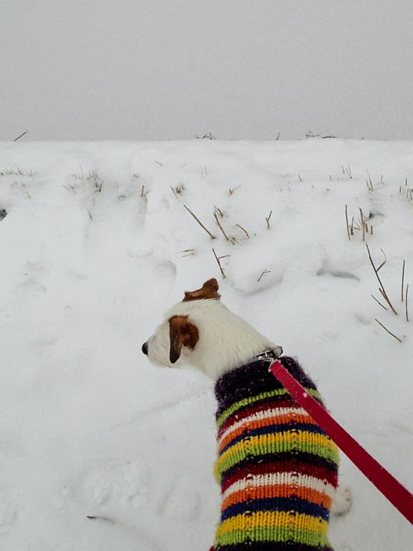 Bas in de sneeuw
