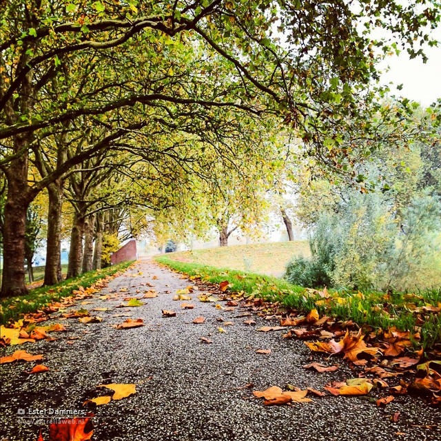 Herfst op de Dalemwal, Gorinchem