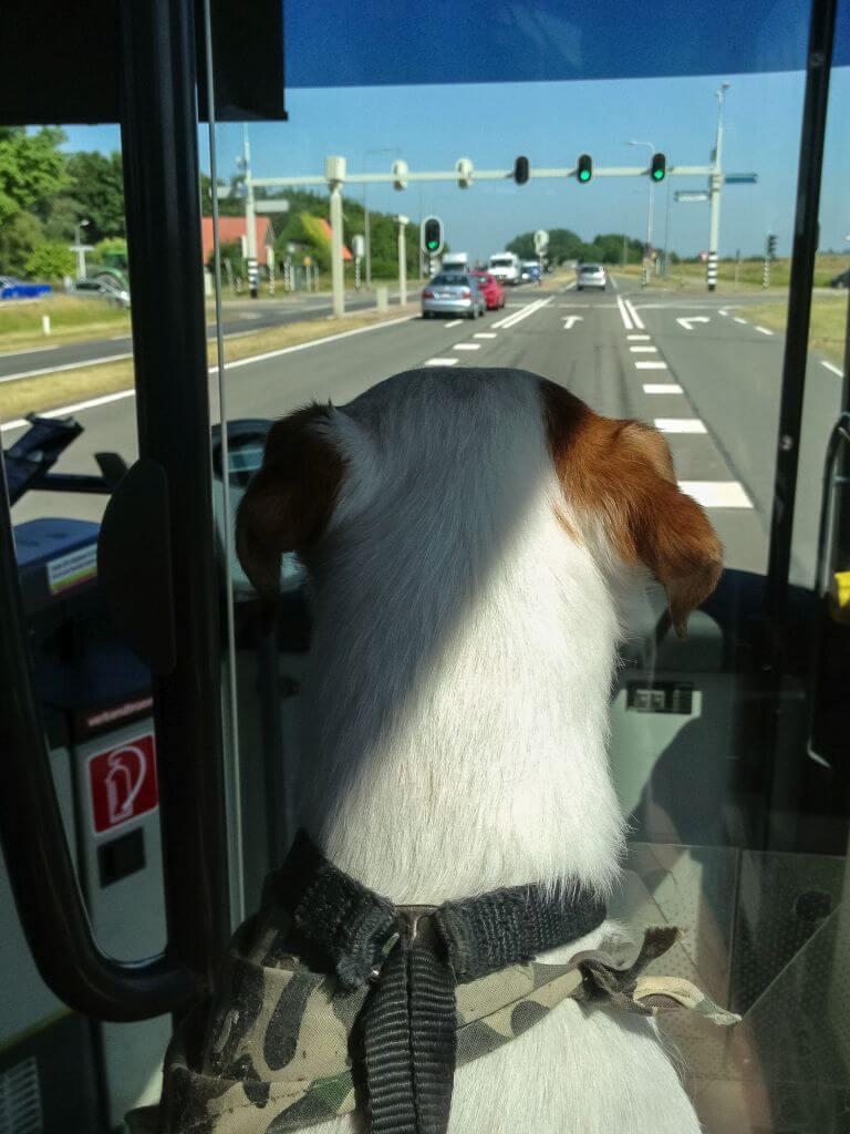 Bas in de bus