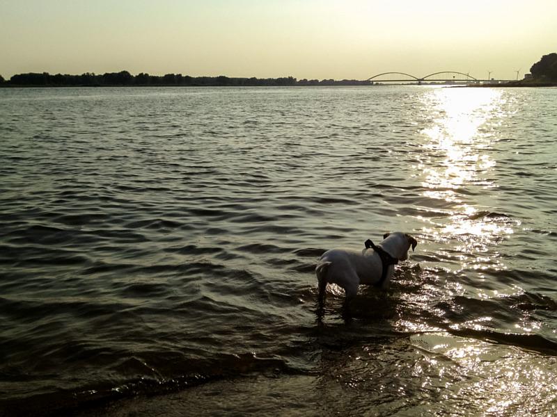 Bas in het water
