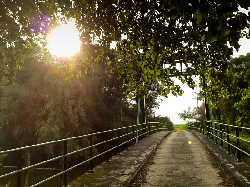 Kroonbrug in de Biesbosch