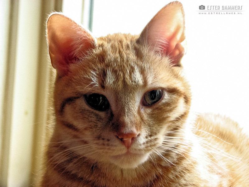 Kat (20-12-2007)