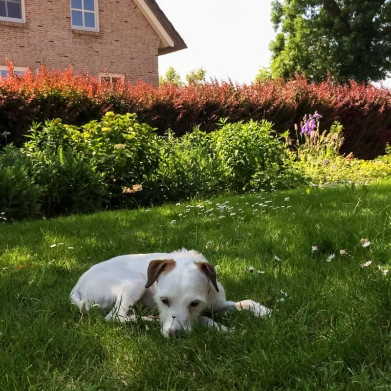 Bas in het gras bij oma