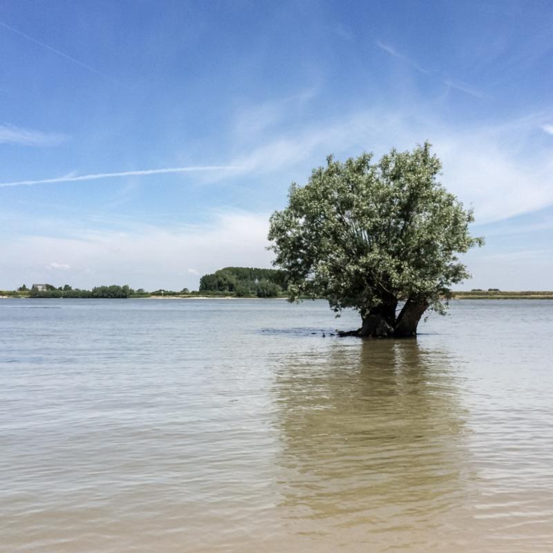 Een boom in het water