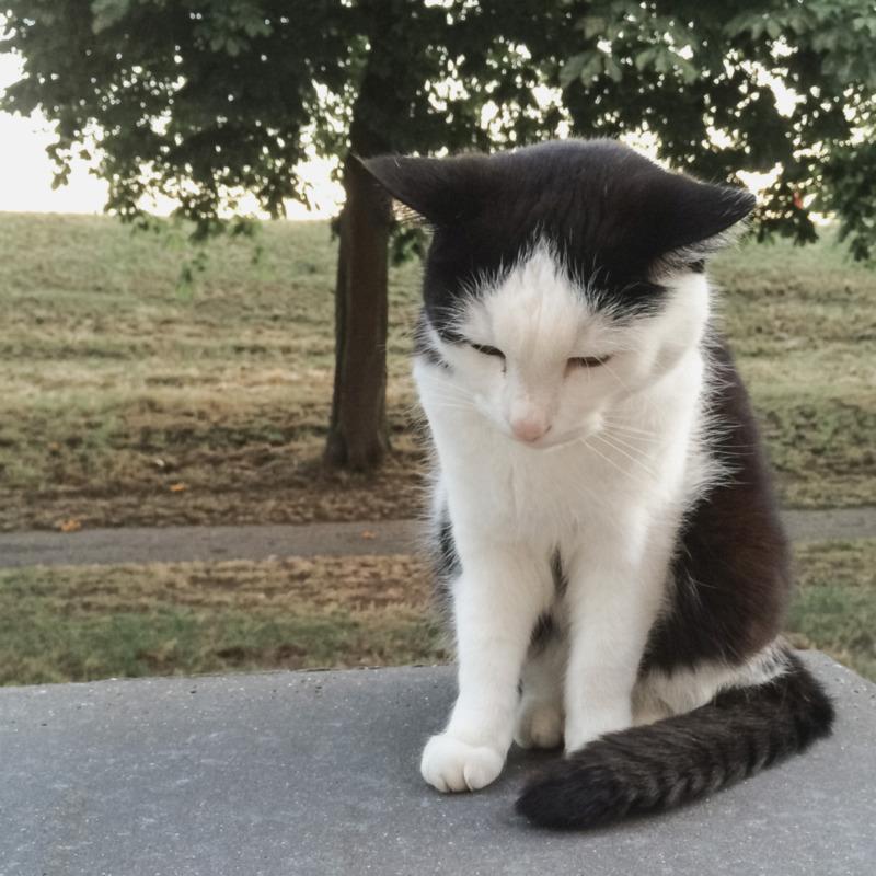 Een mooie kat