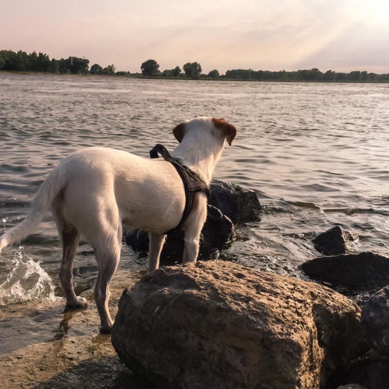 Bas aan het water