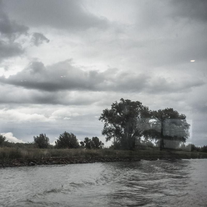 Bomen en de Merwede