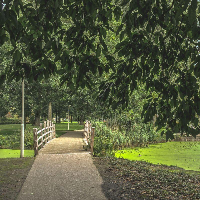 Bruggetje in het park