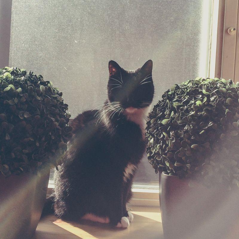 Molly in de vensterbank