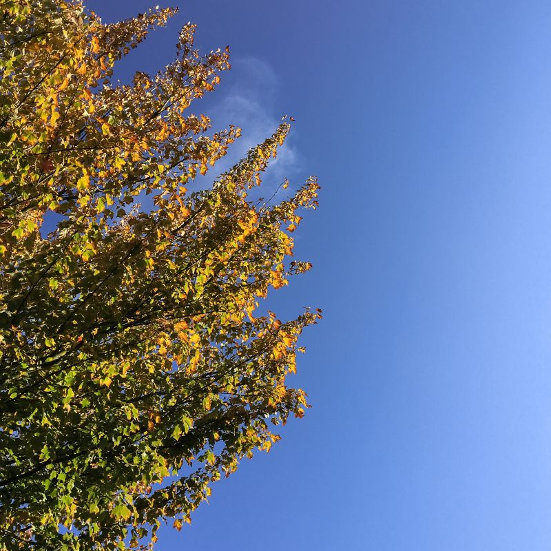 Herfst takken