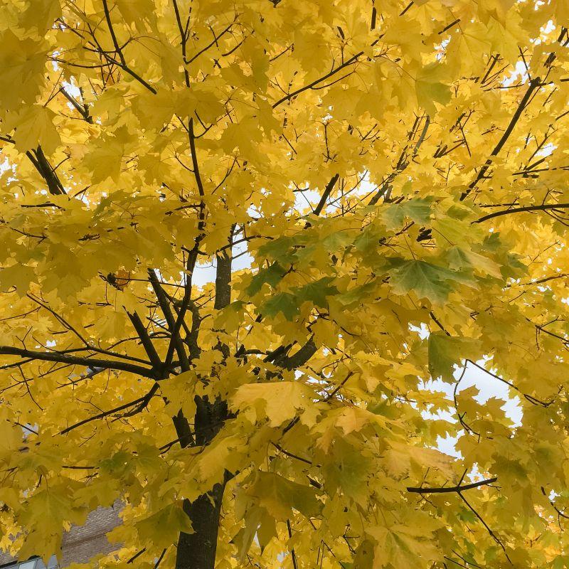 Mooie herfstkleuren