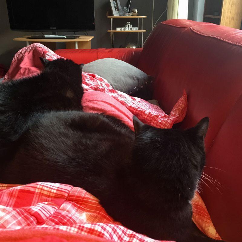 Twee katten op schoot