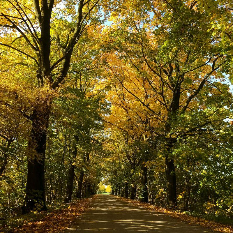Herfst in de bossen