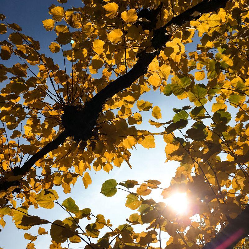 Zon door de bladeren