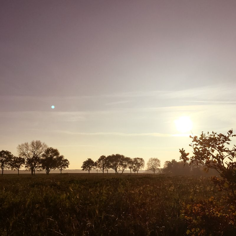 Natuurgebied De Moerputten, Den Bosch