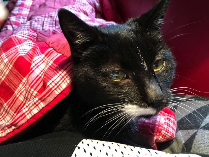 Micky onder de deken