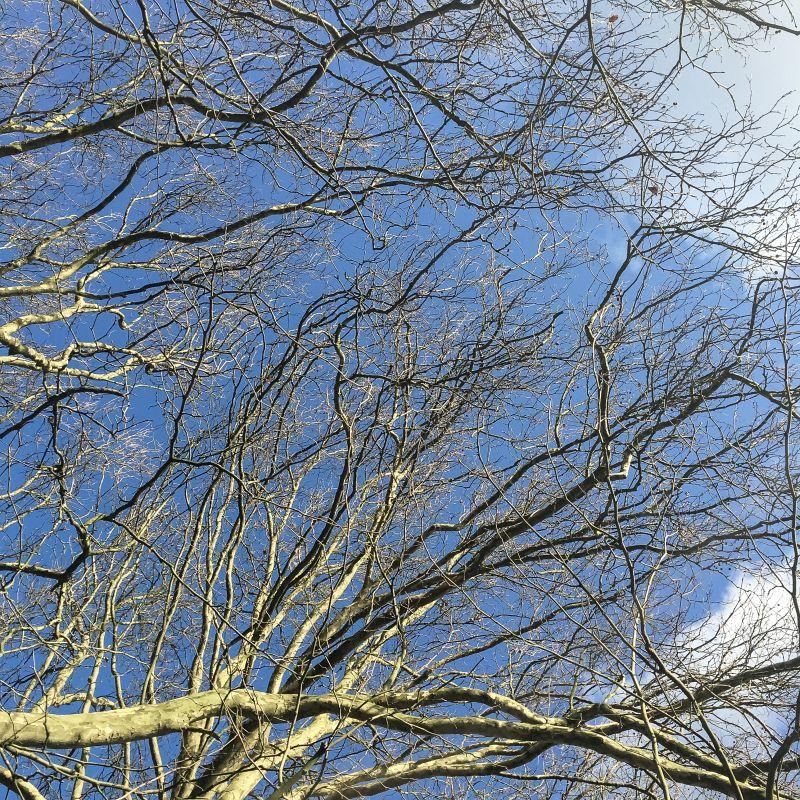 Takken en blauwe lucht