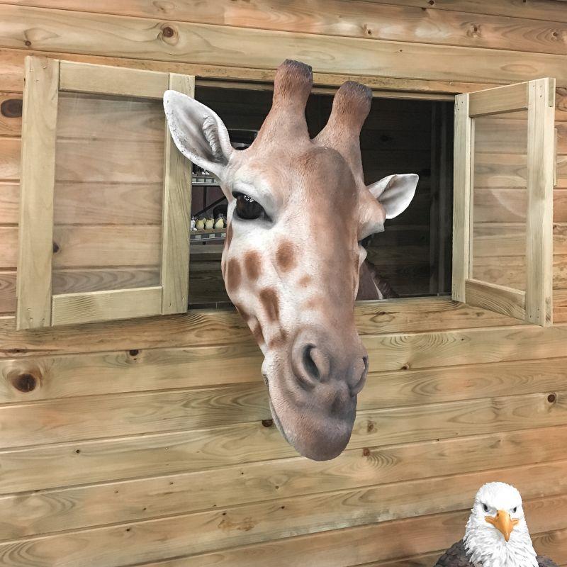 Hallo giraffe!