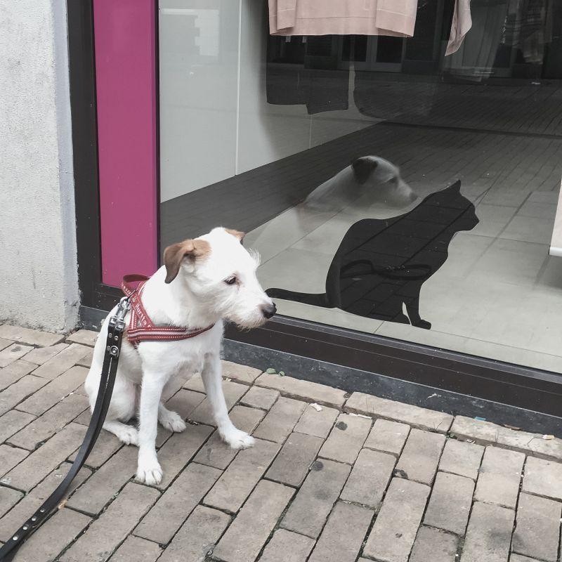 Bas en de kat