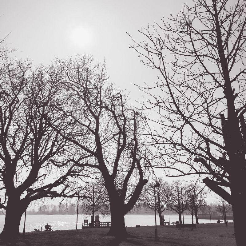 Bomen Buiten de Waterpoort