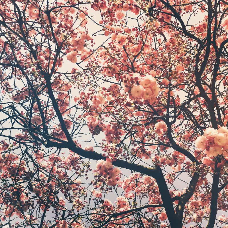 Voorjaar = bloesem!