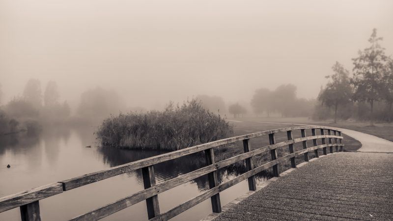Ochtendwandeling in de mist