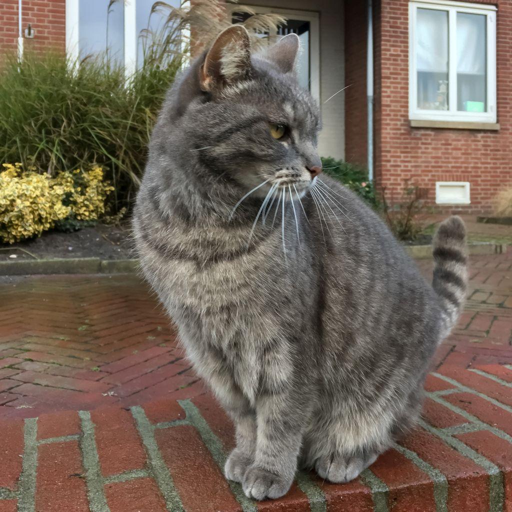 De Dalembolwerk-kat