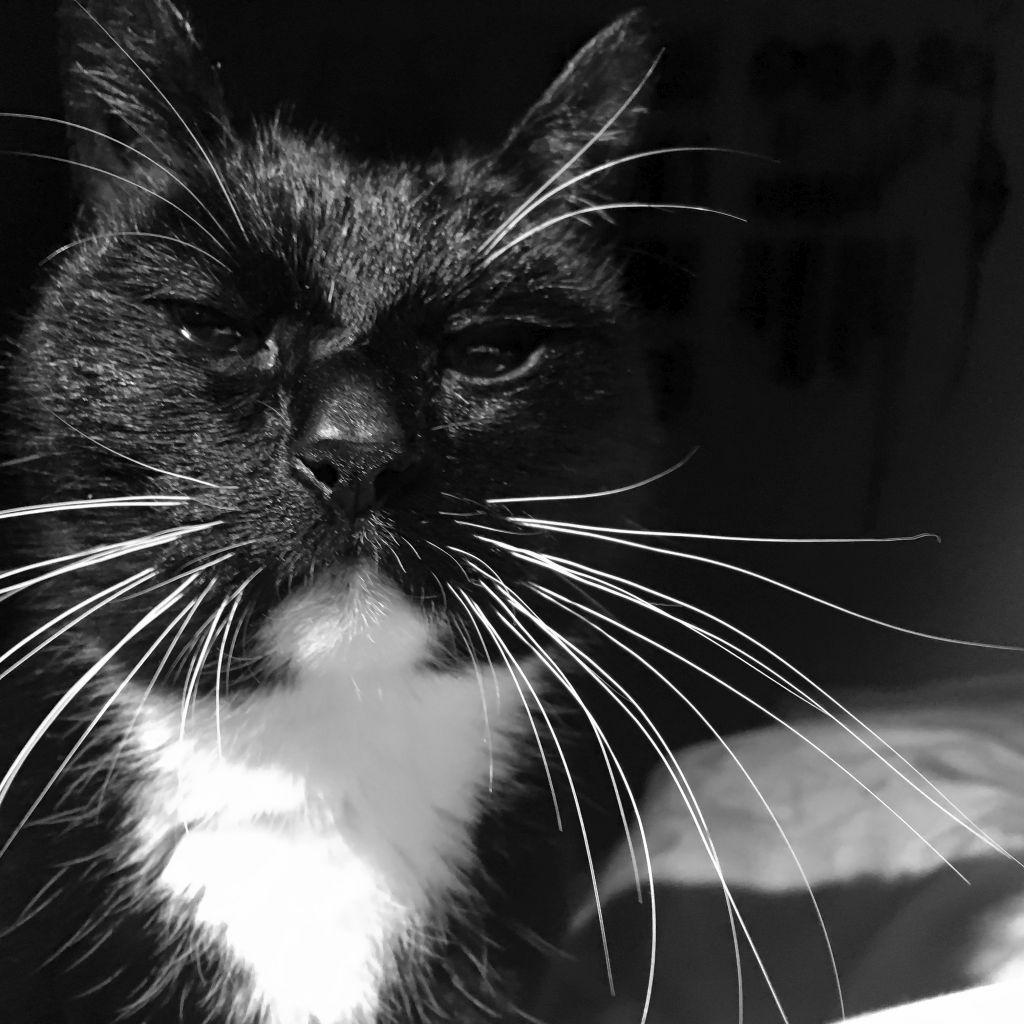 Molly in zwart-wit
