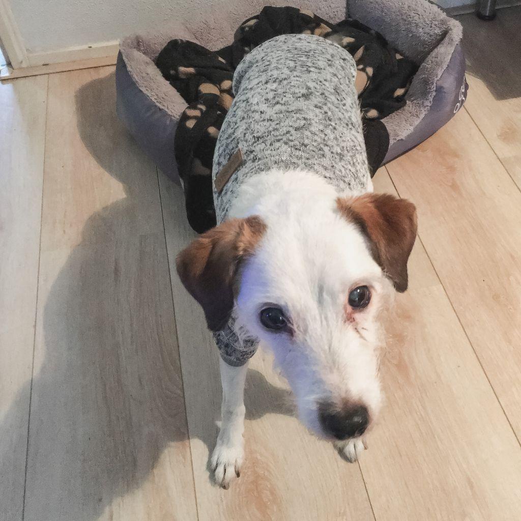Bas met een trui
