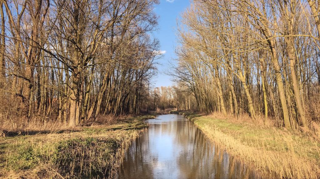 Watertje bij Rijswijk