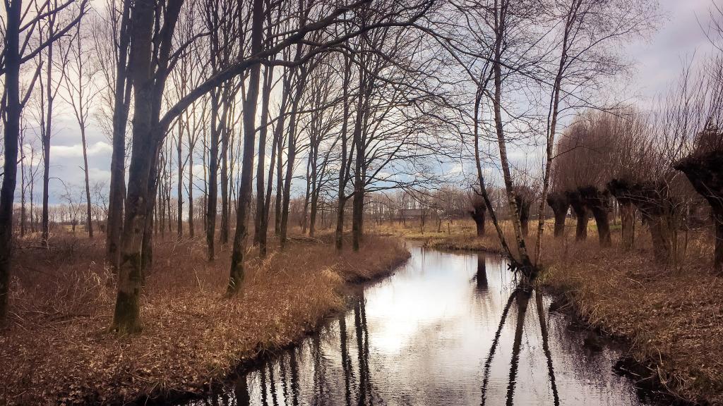 Watertje in het Pompveld
