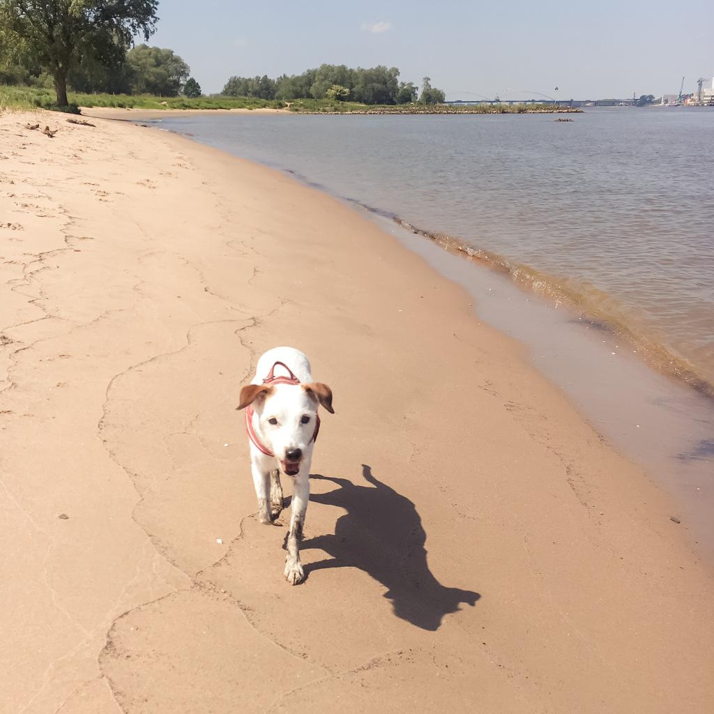 Bas op het strand