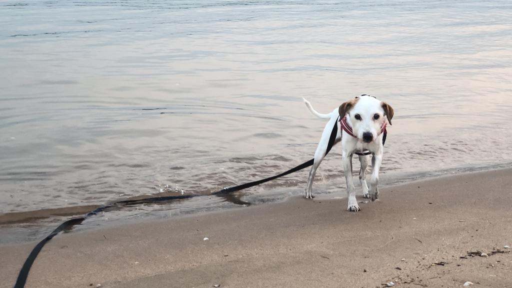 Bas aan het strand