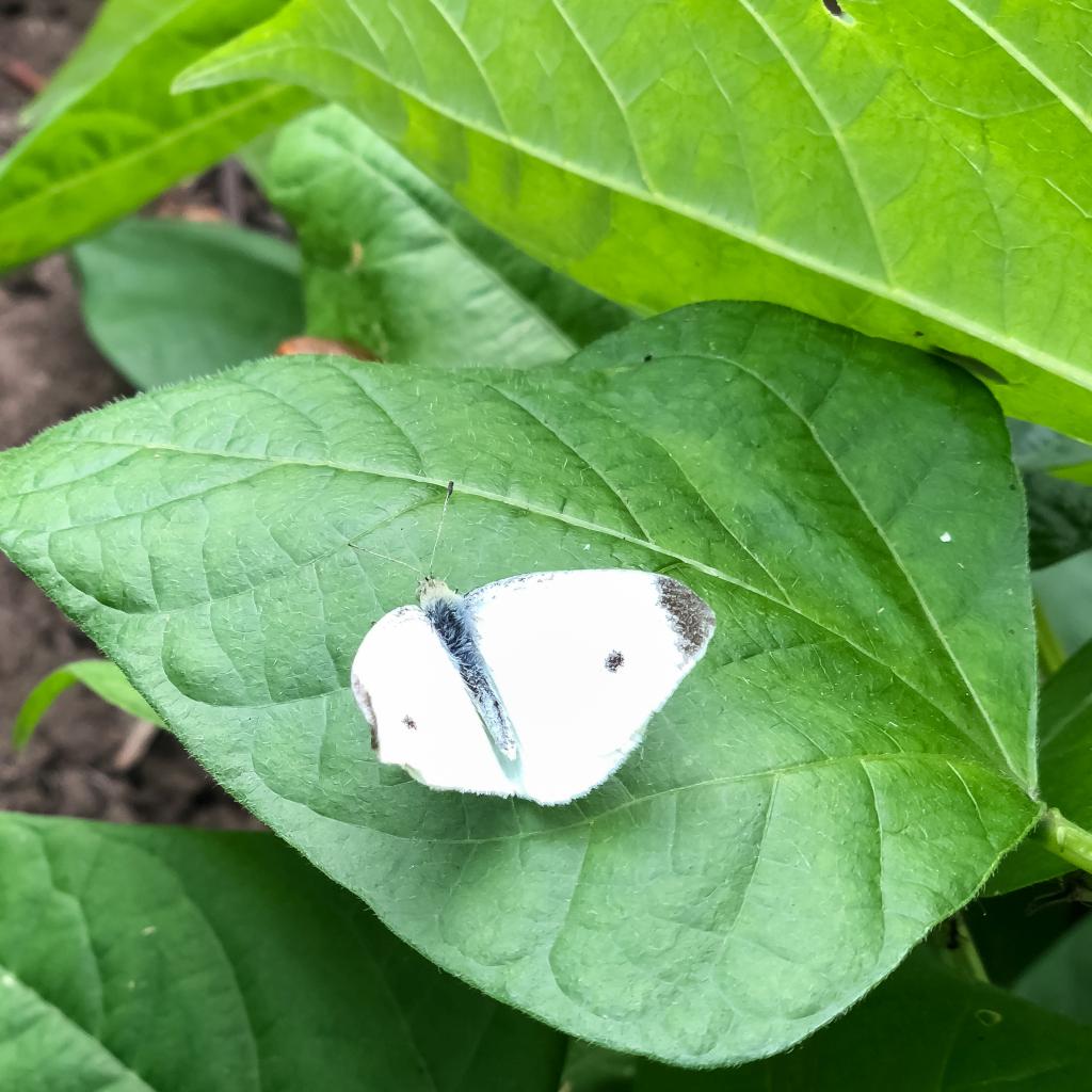 Vlindertje op een blad