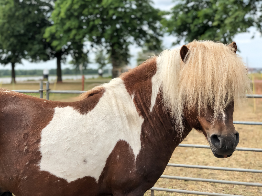 Leuk paardje