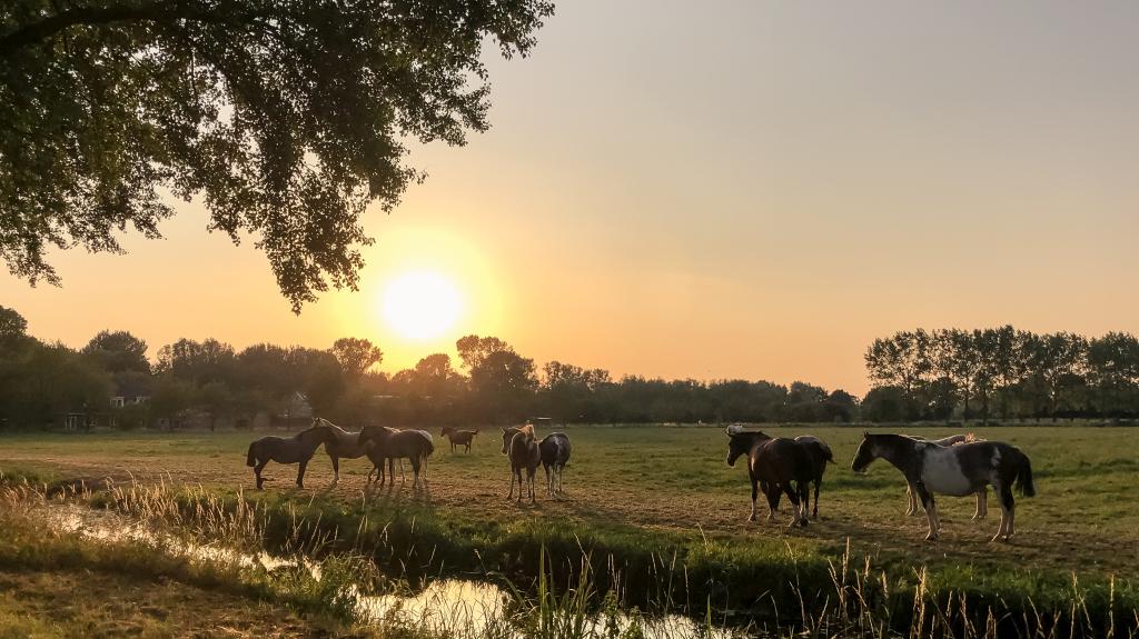 Paarden bij het Lingebos