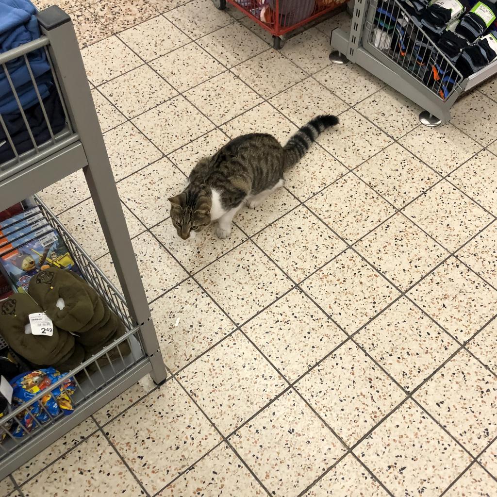 Kat in de Zeeman