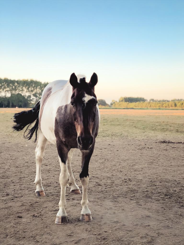 Nieuwsgierig paard
