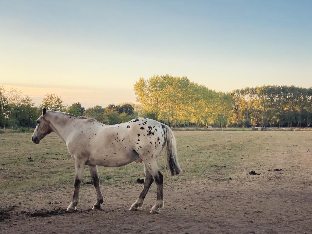 Paard in een kale wei